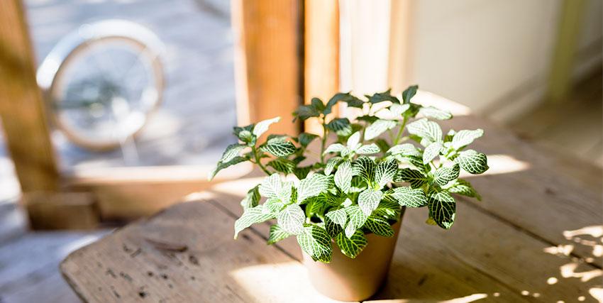 日光をあびる植物