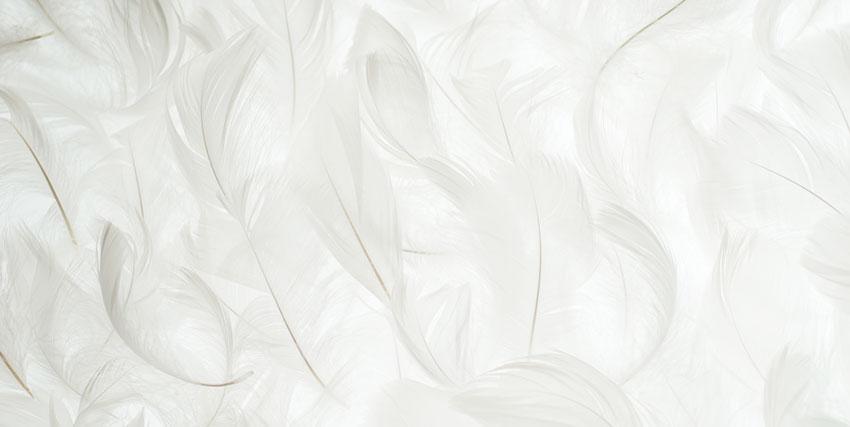 ふわふわの羽
