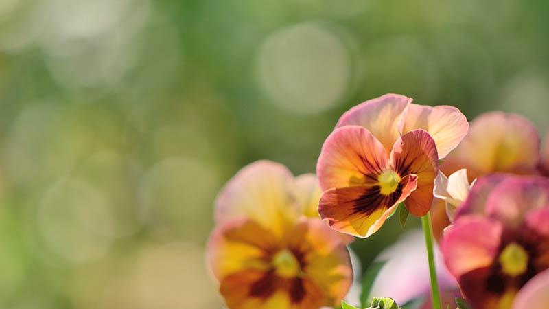 前向きな花