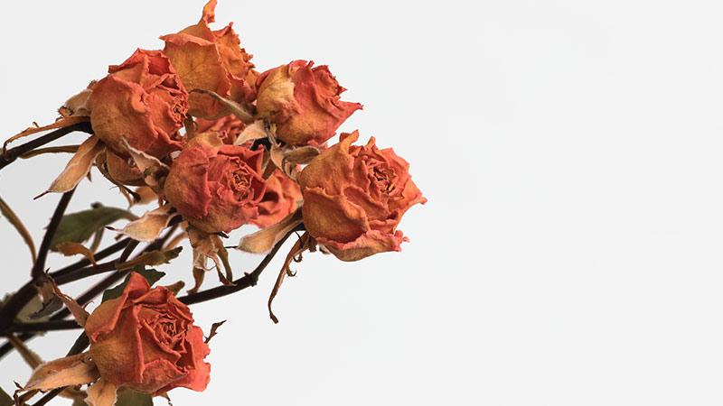 曲がった花