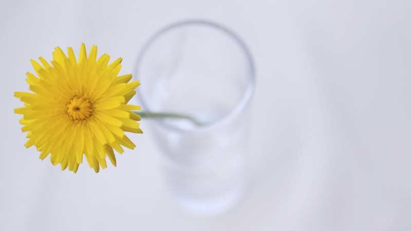 姿勢の悪い花
